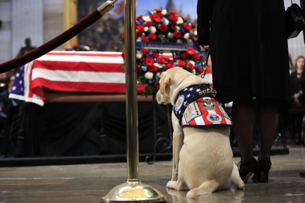 Bush Saluted By Cia Comrades Service Dog Sully Comes Too Oil